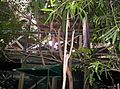 Aviary-at-Brisbane-Forest-Park-3.JPG