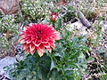 BCBG Flowers 17.jpg