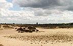 Balloërveld, natuurgebied in Drenthe 015.jpg