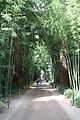 Bambouseraie de Prafrance 20100904 001.jpg
