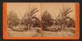 Banana Tree, by Watkins, Carleton E., 1829-1916.png