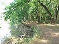 Barbora (rybník), břeh III.jpg