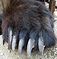 Bear paw.jpg