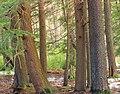 Beaver Dam Trail (5) (13229420804).jpg
