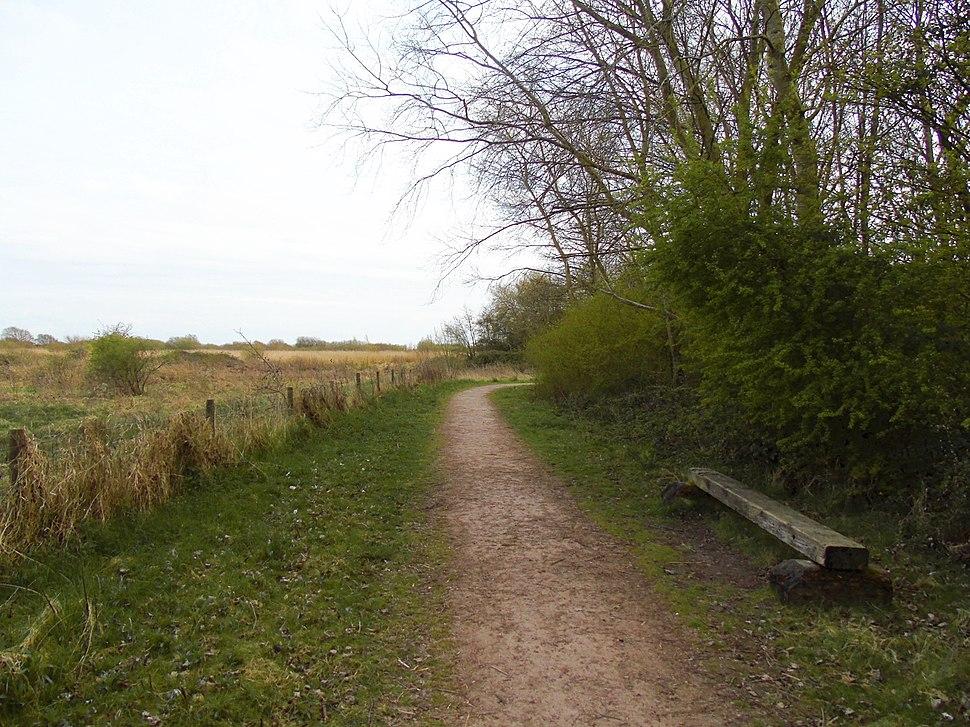 Bench at Woodland Trail at Newport Wetlands RSPB Reserve