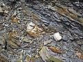 Bentonite (105.6 Ma) in the Dakota Sandstone (Lower Cretaceous) (Dinosaur Ridge, Colorado, USA) 6 (21588540403).jpg