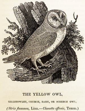 Jenny Uglow - Engraving by Thomas Bewick from History of British Birds