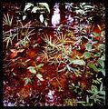 Bican Tomas hasselblad prales 02.jpg