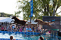 Big Air Dog Jumping Contest (4946504578).jpg