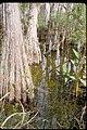 Big Cypress National Preserve, Florida (1d5ce823-4f85-48e8-91d7-de3d877c37aa).jpg