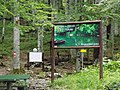 Biogradska gora - National Park, the oldest protected natural resource in Montenegro 16.jpg