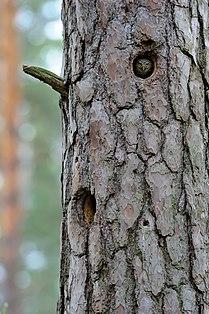 Bird scout.jpg