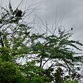 Bird standing in tree.jpg