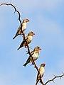 Birds - 1129 (11479260244).jpg