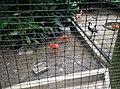 Birds in Zoo Negara Malaysia (4).jpg