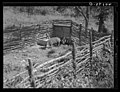 Birdsboro vicinity, Berks Co., PA. Hog pen, Dallas E. Glass farm, 1938 by Sheldon Dick.jpg