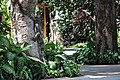 Black-Spiny tail iguana (24569826001).jpg
