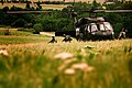Black Hawk landing (9126745519).jpg