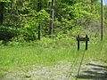 Black Moshannon SP Ski Slope Trail.jpg