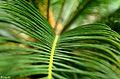 Blatt einer Pflanze.jpg
