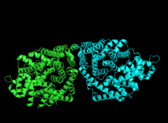 Bornyl diphosphate synthase - Cartoon representation of crystal structure 1N1B colored by monomer.