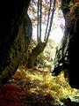 Bosque autóctono, Galiza.jpg