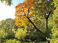 Botanička bašta Jevremovac, Beograd, jesenje boje, svetlost i senke 10.jpg
