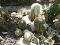 Botanička bašta Jevremovac 060.JPG