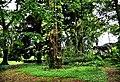 Botanic garden limbe3.jpg