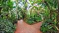 Botanischer Garten Schaugewächshaus Tropenhaus.jpg