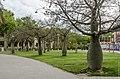 Bottle trees near Carco square (2014) - panoramio.jpg
