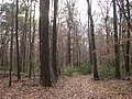 Bottomland hardwood forest amite river.jpg