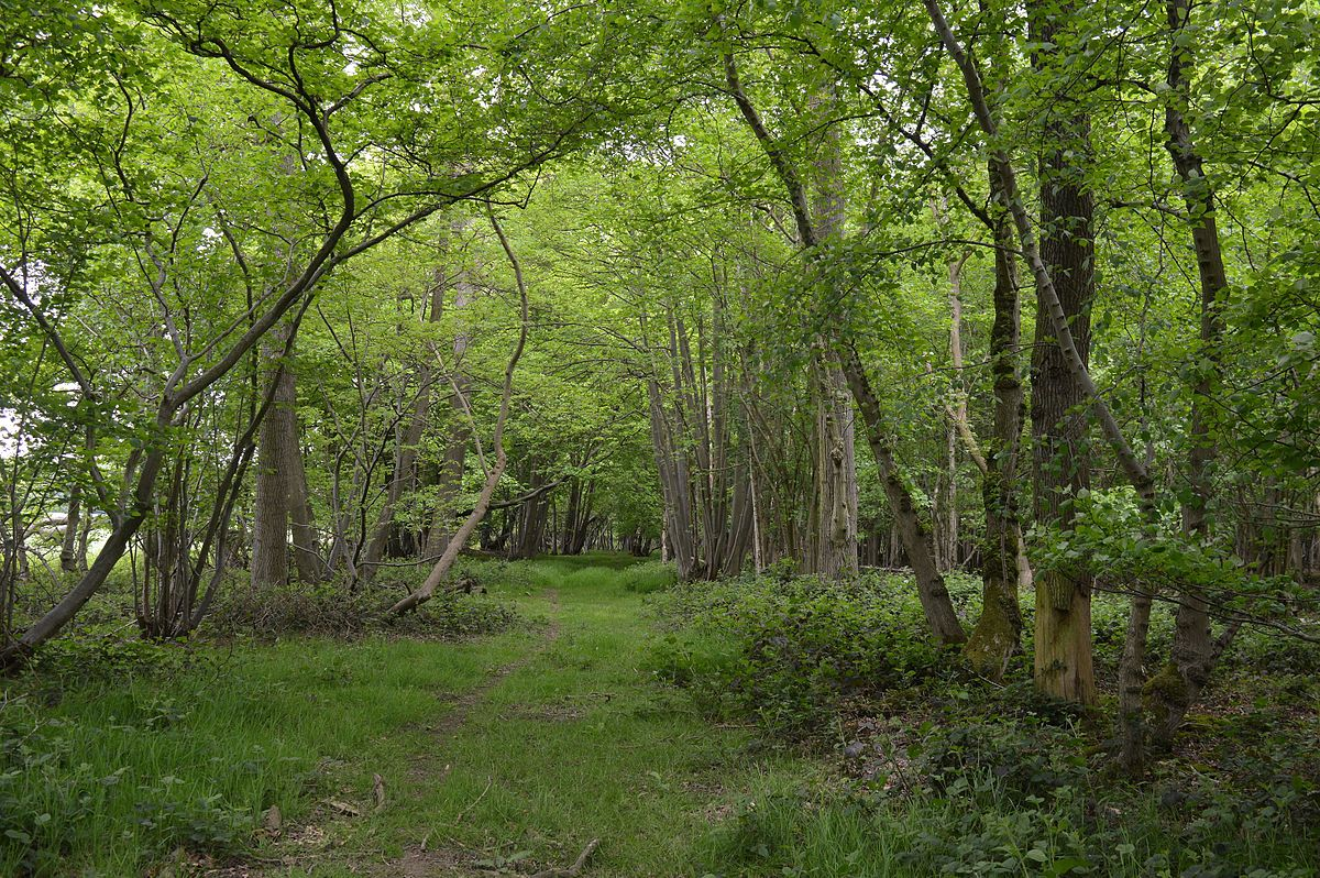 Bovingdon Hall Woods - Wikipedia