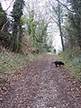 Bridleway to Old Shaston Drove - geograph.org.uk - 299666.jpg