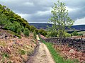 Brockholes Wood - geograph.org.uk - 426539.jpg