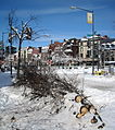 Broken tree limbs - Blizzard of 2010.JPG
