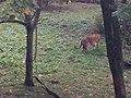 Bronx Zoo - New York - USA - panoramio (10).jpg