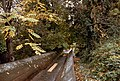 Broughton lumber mill and flume, Hood WA (37111748725).jpg