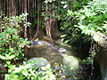 Burgers Zoo - broad-snouted caimans.jpg