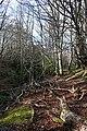 Burn of Letterfourie - geograph.org.uk - 348070.jpg