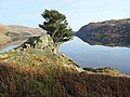 Bush above Haweswater - geograph.org.uk - 1065464.jpg