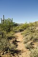 Butcher Jones Trail, Tonto National Forest, Fort McDowell, AZ 85264, USA - panoramio (38).jpg