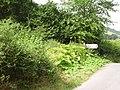 Butterbur, Llangunllo - geograph.org.uk - 226040.jpg