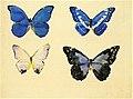 Butterflies 2 Augusto Giacometti (1897).jpg