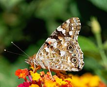 Butterfly August 2008-3.jpg
