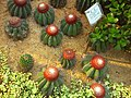 Cactus garden ILSan lake - panoramio.jpg