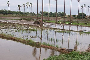 Irrigation statistics - Basin irrigation for a rice crop