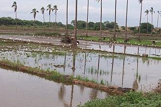 Irrigation statistics - Basin irrigation for a rice crop