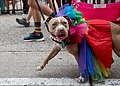 Capital Pride Parade (48033332353).jpg
