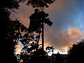Carmel Skyline.jpg